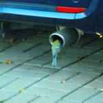 Deutsche Umwelthilfe will gerichtlich Diesel-Fahrverbote in Mainz durchsetzen